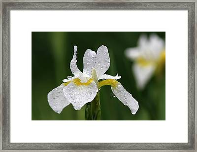 The White Iris Framed Print by Juergen Roth