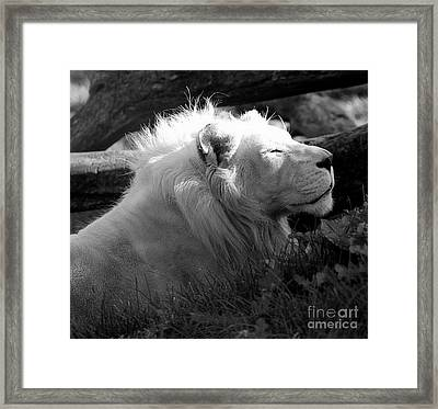 The White King Framed Print