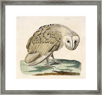 The White Owl Framed Print by British Library