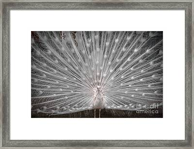 The White Peacock Framed Print by Gary Keesler