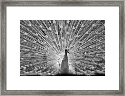 The White Peacocks  Framed Print