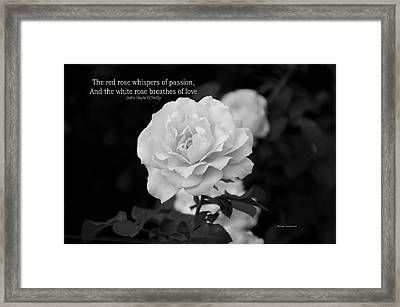 The White Rose Breathes Of Love Framed Print