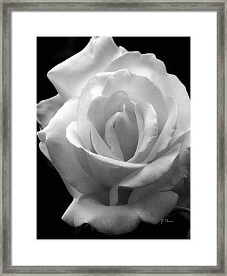 Framed Print featuring the photograph The White Rose by James C Thomas