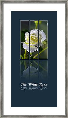 The White Rose Framed Print by Sarah Christian