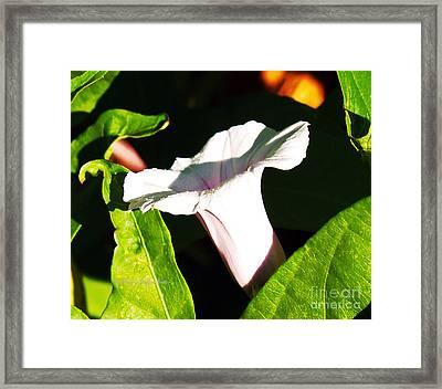 The White Trumpet Framed Print