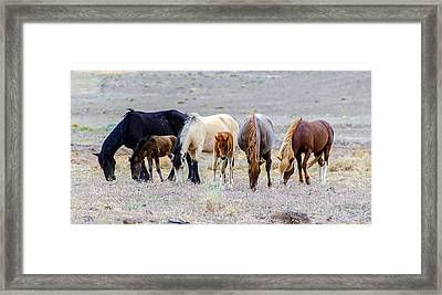 The Wild Bunch Framed Print