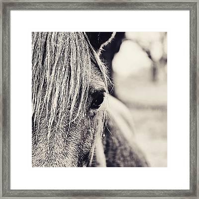 The Wild One #horse #rain #animal Framed Print