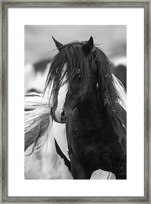 The Wild One Framed Print