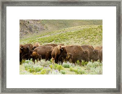 The Wild West Framed Print by Bill Gallagher