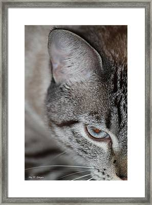 The Wild Within  Framed Print by Amy Gallagher