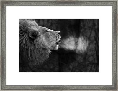 The Will Of The King Framed Print