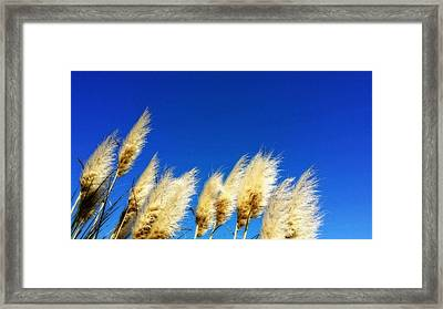 The Wind Gatherers - Sea Grass Art By Sharon Cummings Framed Print