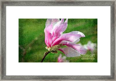 The Windblown Pink Magnolia - Flora - Tree - Spring - Garden Framed Print by Andee Design