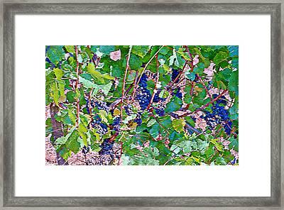 The Wine Maker I Framed Print by Ken Evans