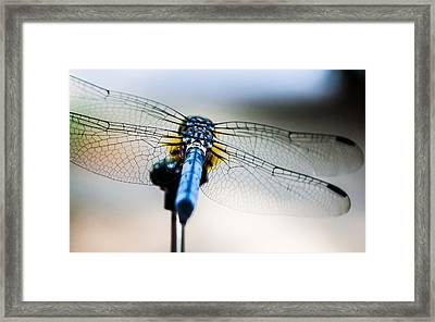 The Wings Of A Dragonfly Framed Print by Shelby  Young