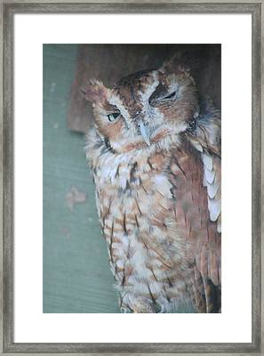 The Wink Framed Print by Rhonda Humphreys