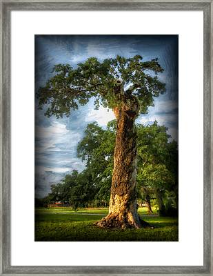 The Wisdom Tree Framed Print