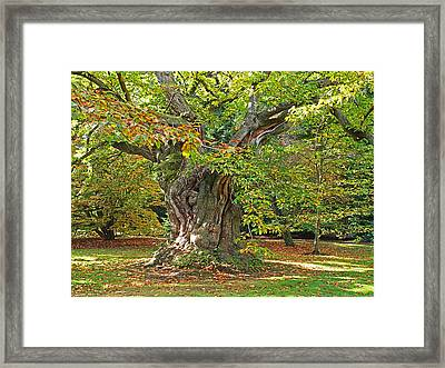 The Wise Old Tree Framed Print by Gill Billington