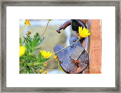 The Wise Owl Padlock - Cambria California  Framed Print by Tap On Photo