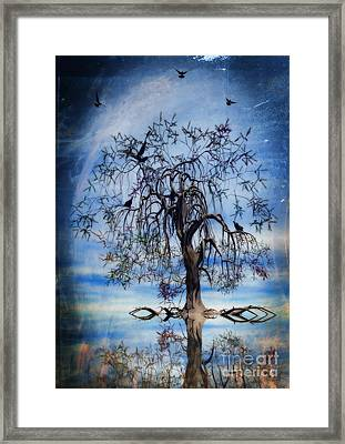 The Wishing Tree Framed Print by John Edwards