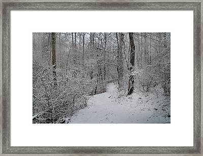 The Wishing Woods Framed Print by Betsy Knapp