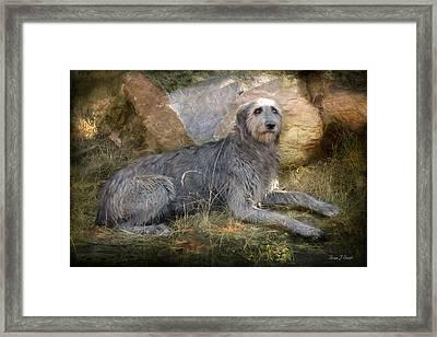 The Wolfhound  Framed Print by Fran J Scott