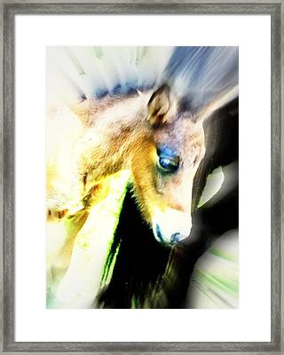 Take A Look If You Wonder What Is Really The Wonder Of Life  Framed Print