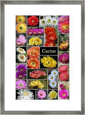 Framed Print featuring the photograph The Wonderful World Of Cactus by Cindy McDaniel