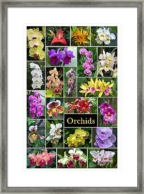 The Wonderful World Of Orchids Framed Print