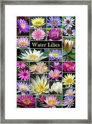Framed Print featuring the photograph The Wonderful World Of Water Lilies by Cindy McDaniel
