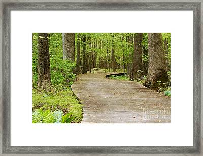 The Wooden Path Framed Print