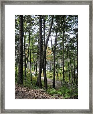 The Woodland Coastal Maine Framed Print by Patricia E Sundik