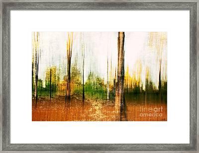 The Woodlot Framed Print by Scott Pellegrin