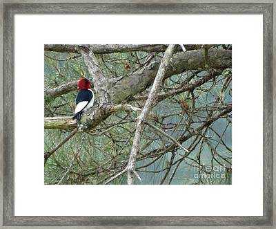 The Woodpecker Framed Print by Joseph Baril