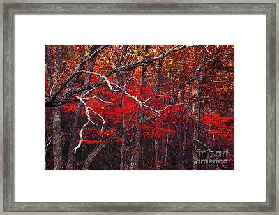 The Woods Aflame In Red Framed Print by Paul W Faust -  Impressions of Light