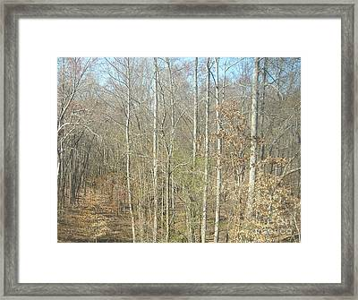 The Woods Framed Print by Joseph Baril