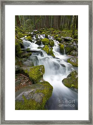 The Woods Trail Framed Print by Marco Crupi