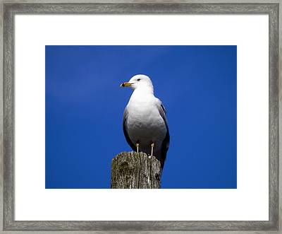 The World I See Framed Print
