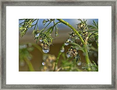 The World In A Drop Of Water Framed Print by Peggy Hughes