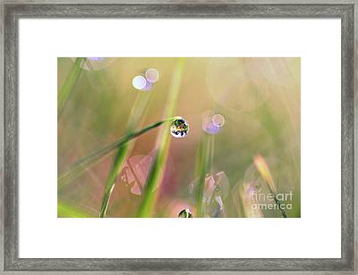 The World In A Drop Framed Print by Sylvia Cook