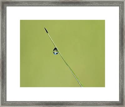 Framed Print featuring the photograph The World Within A Dewdrop by Penny Meyers