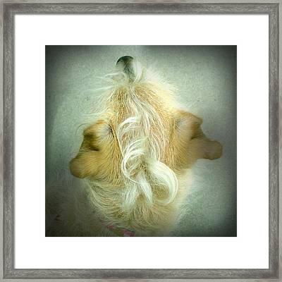 The Yellow Dog Awaits Framed Print by Greg Kopriva