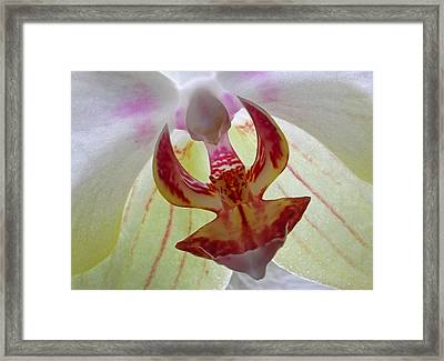 The Yellow Orchid Framed Print
