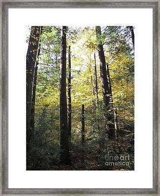 The Yellow Wood Framed Print by Melissa Stoudt