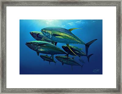 Yellowfin Framed Print