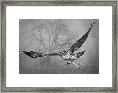 The Young And The Old 2 Framed Print by Angie Vogel