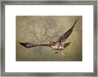 The Young And The Old Framed Print by Angie Vogel