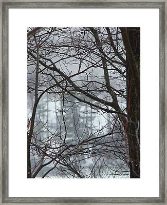 The Yugoslavian Forest 1 Framed Print by The Black Rose
