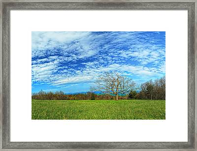 The Zen Meadow Framed Print