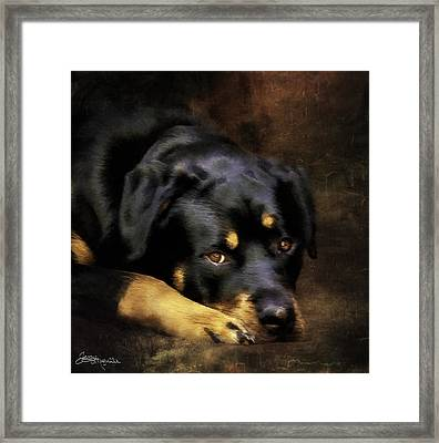 The Zeus Framed Print by Jacque The Muse Photography